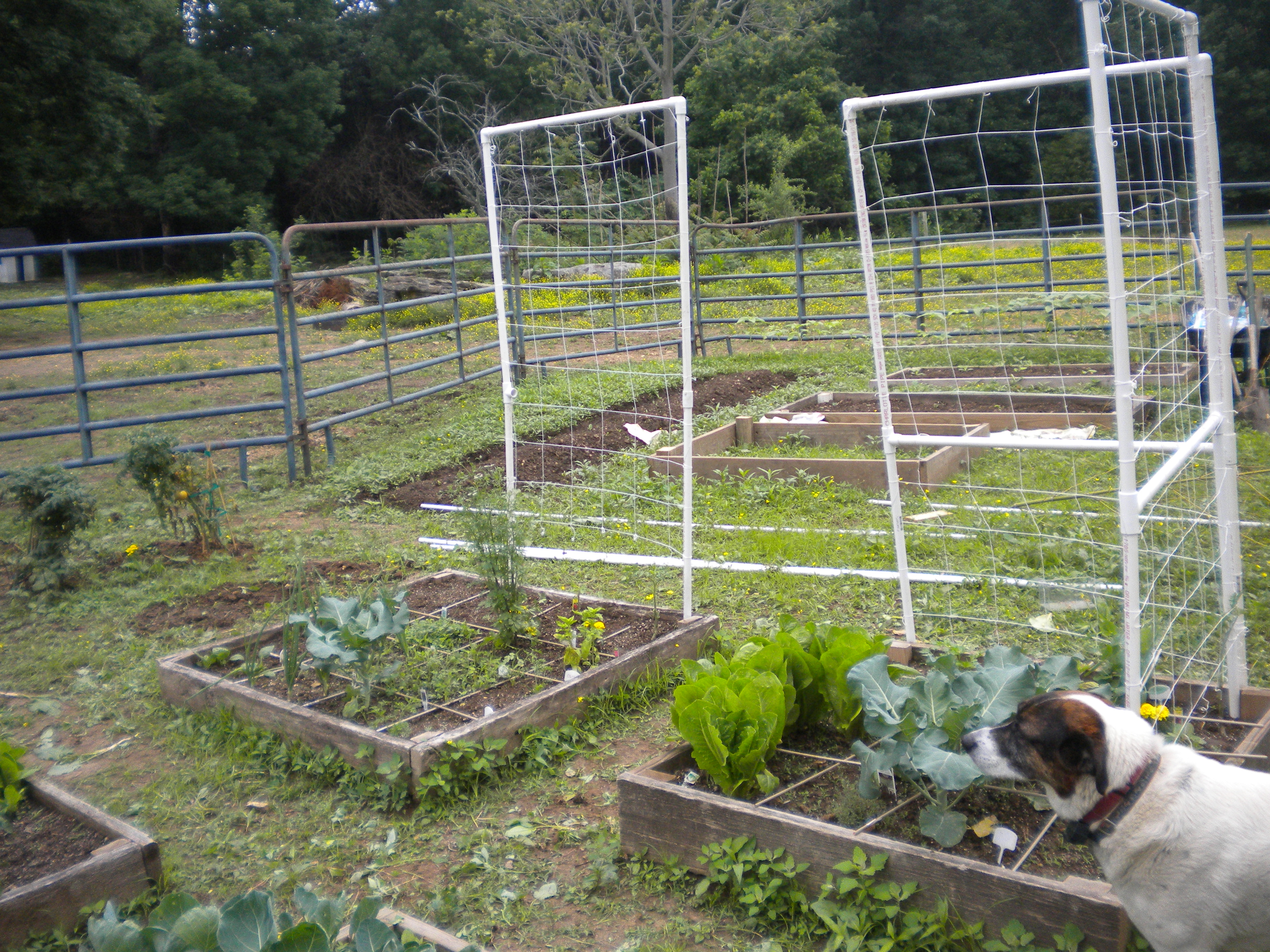 neverpictureperfect square foot garden update 3 never picture perfect