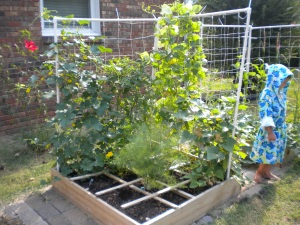 You can see my fennel, tomatoes, beans, etc...