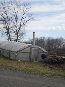 Meenonite greenhouse heated by woodfire means spring's on it's way!