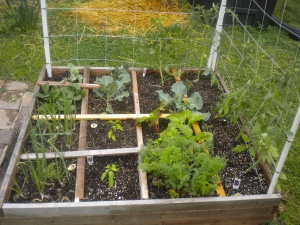 Tomatoes along the right hand side; broccoli, lettuce, carrots and jalepenos